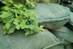 Sandbags and plant seedlings Stock Photo
