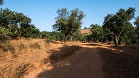 Sandbana till och med skog Royaltyfri Bild