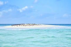 Sandbank Royaltyfri Foto