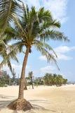 Sandbeach tropical Fotos de Stock Royalty Free
