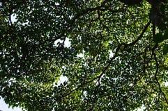 Sandbox Tree Royalty Free Stock Image