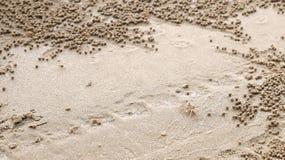 Sandbubblerkrabba med sandbollar Royaltyfri Foto