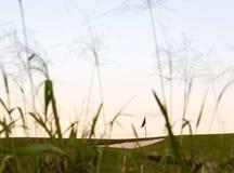Sandbunker framme av den golfgräsplan och flaggan Arkivfoto