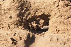 sandcastle стоковое изображение rf
