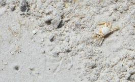 Sandcrabs Imagen de archivo libre de regalías