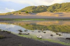 Sanddüne, die das Wasser überschwemmte Stockbilder
