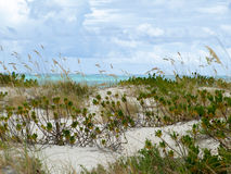 Sanddüne durch südlichen Ozean Stockfotografie