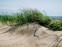 Sanddüne-Gras, schwarze Felsen-Sande Stockbild