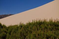 Sanddüne und Bäume lizenzfreie stockfotos