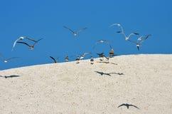 Sanddüne und Vögel stockbild