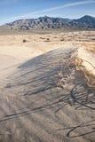 Sanddüne-Vegetation Stockbild
