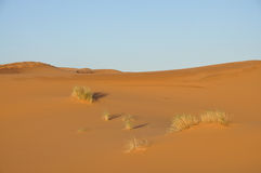 Sanddünen in der Sahara-Wüste Stockfotografie