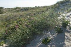 Sanddünen des Curonian spucken auf der Ostsee Lizenzfreie Stockfotografie