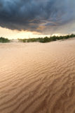 Sanddünen im Wald Stockfoto