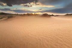 Sanddünen im Wald Lizenzfreies Stockfoto