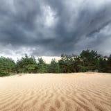 Sanddünen im Wald Lizenzfreie Stockfotografie