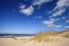 Sanddünen nahe zum Meer stockfotos