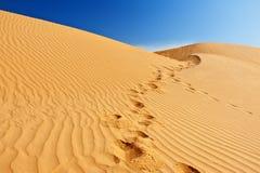 Sanddünen in Sahara Lizenzfreies Stockfoto