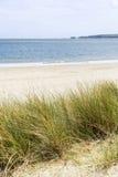 Sanddünen und Gras setzen Landschaft mit überlegter flacher Tiefe auf den Strand Lizenzfreies Stockfoto