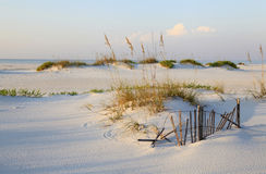 Sanddünen und Seehafer auf einem ursprünglichen Florida-Strand Stockbild