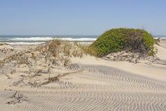 Sanddünen und Vegetation auf einer Fernozean-Küste Stockfotografie