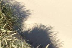 Sanddünen von Rubjerg Knude Stockbild