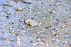 Sanddollar auf Mexiko-Strand lizenzfreie stockbilder