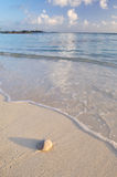 Sanddollar auf weißem Sandstrand Stockfotos
