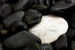 Sanddollar in Rocks Stock Image