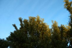 Sanddornbusch im Sonnenunterganglicht stockfoto