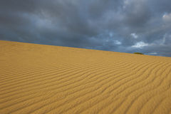 Sanddune Desert Australia Stock Photos
