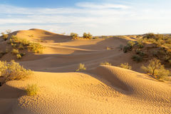 Sanddunes Stockfotografie