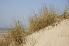Sanddunes. At the French coast in Gravelines Stock Photography