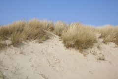 Sanddunes. At the French coast in Gravelines Royalty Free Stock Photo