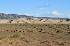Sanddunes in the Desert Gobi. Mongolia Royalty Free Stock Photo