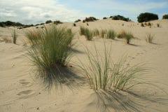 Sanddunes en voetstappen in het zand stock afbeeldingen