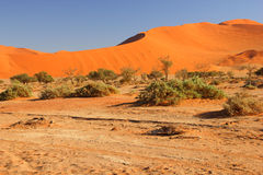 Sanddunes Namibia Fotografia Stock
