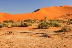 Sanddunes Namibia. Sossusvlei Namib-Naukluft National Park Namibia Stock Photography