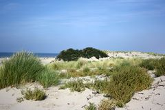 Sanddunes in the Netherlands. This picture of the sanddunes is taken in Hoek van Holland. You can just see a small part of the sea, that is the North Sea Stock Image