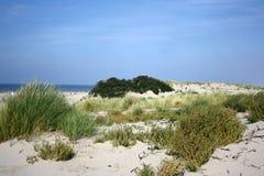 Sanddunes nos Países Baixos Imagem de Stock