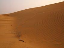 Sanddyn Arkivbilder
