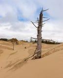 Sanddyn 7 Arkivbilder