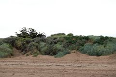 Sanddyn, Brean strand royaltyfri foto