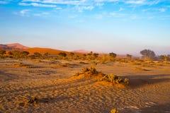 Sanddyn i den Namib öknen på gryning, roadtrip i den underbara Namib Naukluft nationalparken, loppdestination i Namibia, Afr Arkivfoto