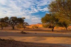 Sanddyn i den Namib öknen på gryning, roadtrip i den underbara Namib Naukluft nationalparken, loppdestination i Namibia, Afr Royaltyfria Bilder