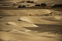 Sanddyn i den Nubra dalen Arkivfoto