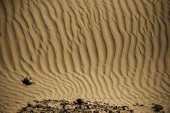 Sanddyn i den Nubra dalen Arkivfoton