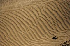 Sanddyn i den Nubra dalen Royaltyfri Foto