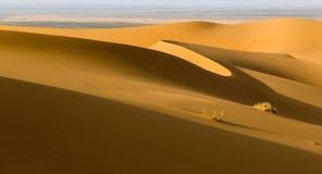 Sanddyn i erget av Merzouga, Marocko arkivfoto