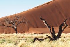 Sanddyn i pannan av Sossusvlei i Namibia _ arkivfoton